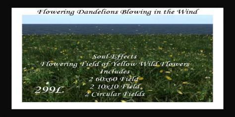 -SE- Pack of Flowering Yellow Wild FlowersPIC